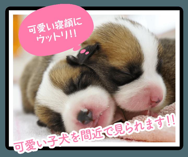 子犬展示館|つくばわんわんランド